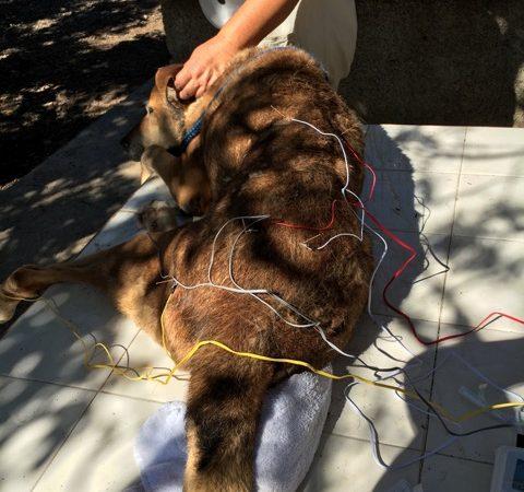 electro-acupuntura